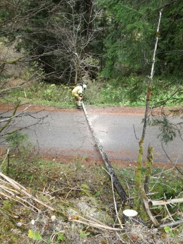 Umgestürtzte Bäume nach starken Windböen